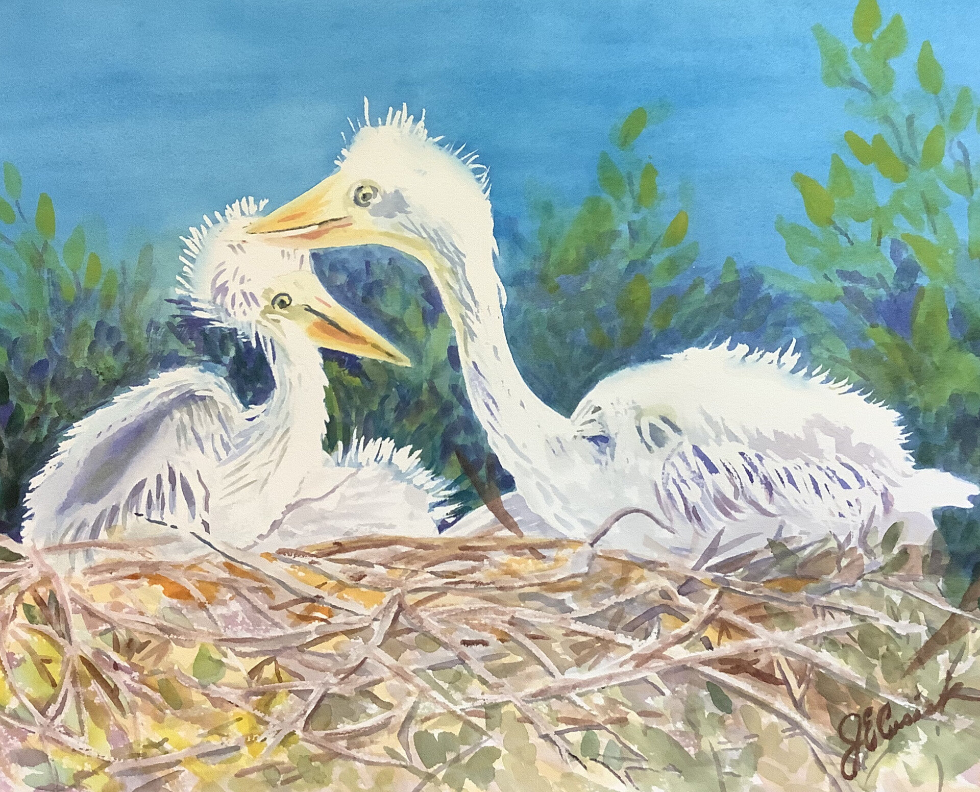 Cusick Joyce - Egret Chicks